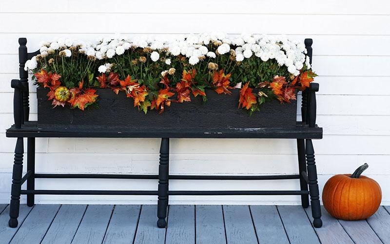 Menší podzimní sklizeň i na vašem balkoně.