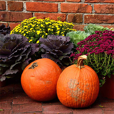 10-Minute Ideas for Harvest Decor on Your Balcony