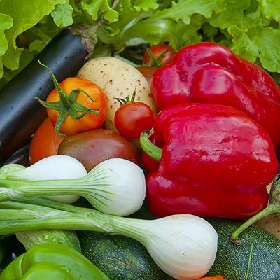 Summer vegetables in a garden