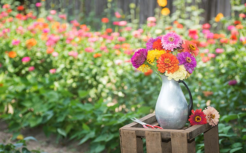 Select Cut Flowers