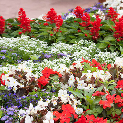 10-Minute Ideas to Get the Most Out of Your Annuals
