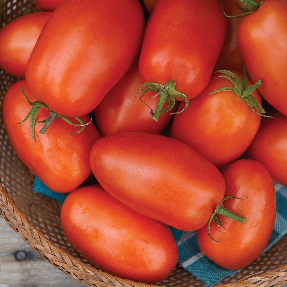 10 of the Most Popular Vegetable Seeds to Sow