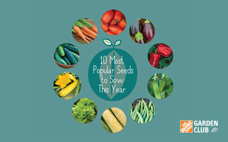Plan Your Edible Garden with These Tips for Popular Vegetable Seeds