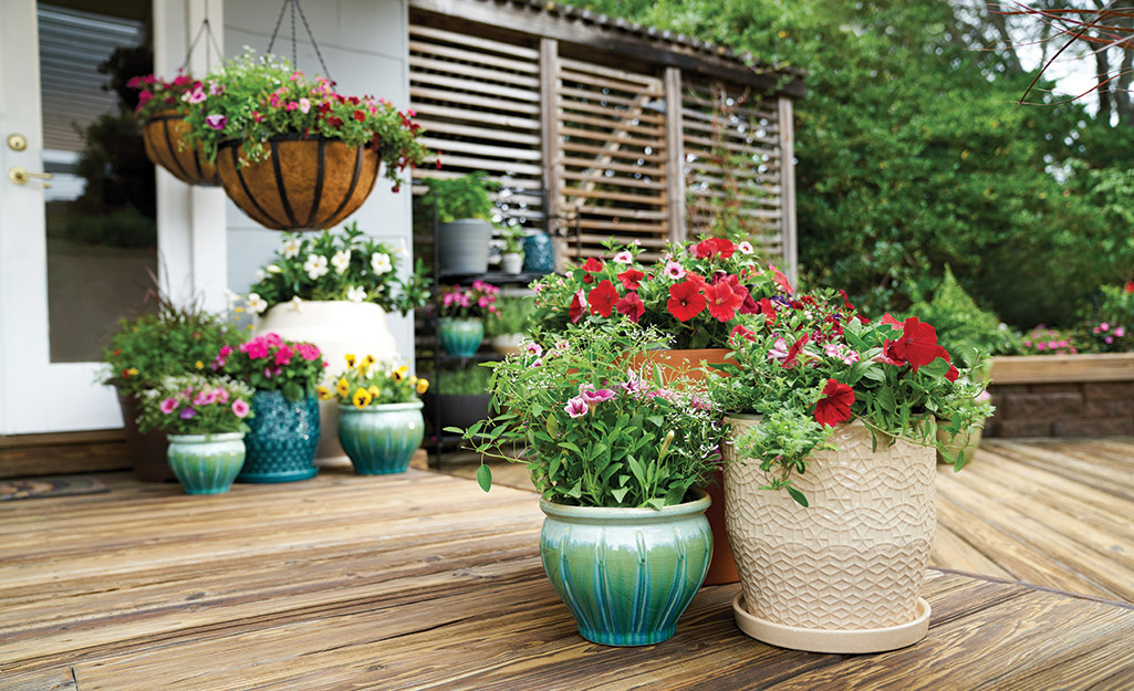 Colorful annuals in pots on a deck