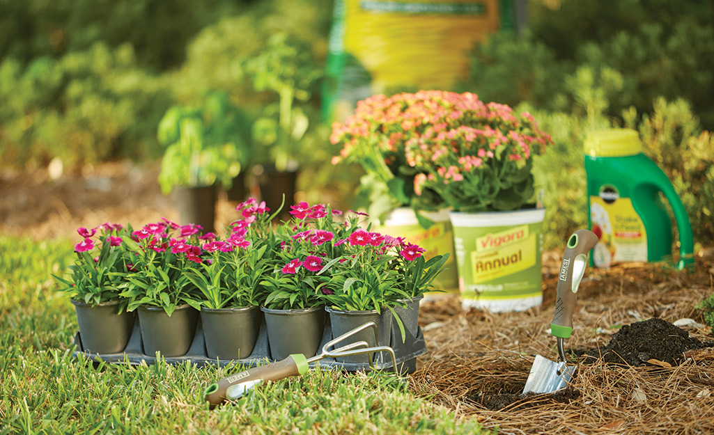 Flower bed with annuals and garden tools