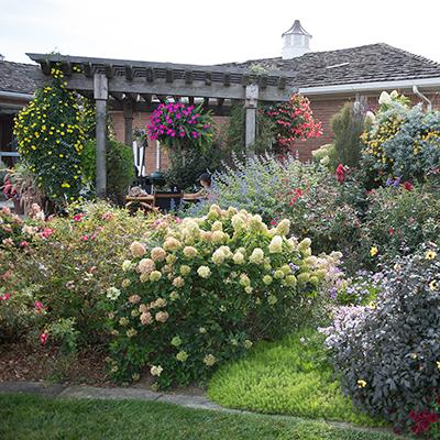 A summer backyard garden with hydrangeas