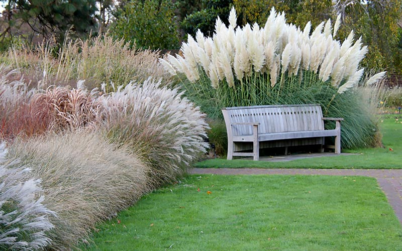 Plant Movement with Ornamental Grasses