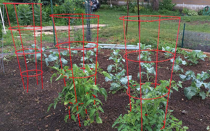Frame Your Tomatoes