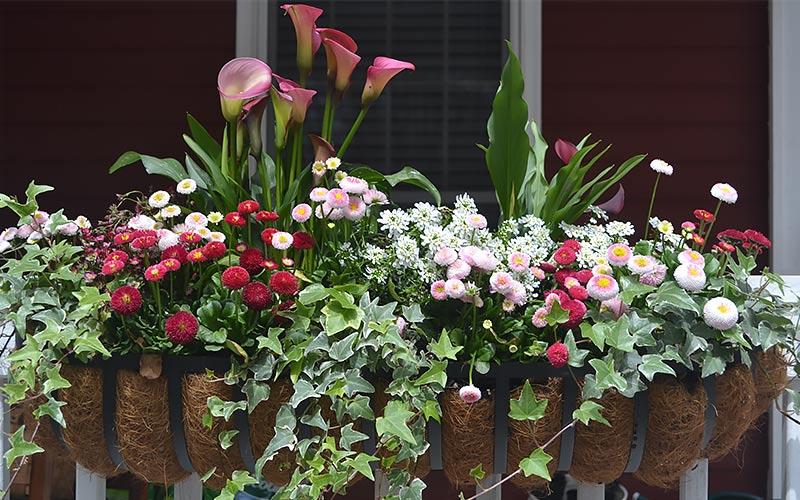 Hello Spring, Hello Windowboxes