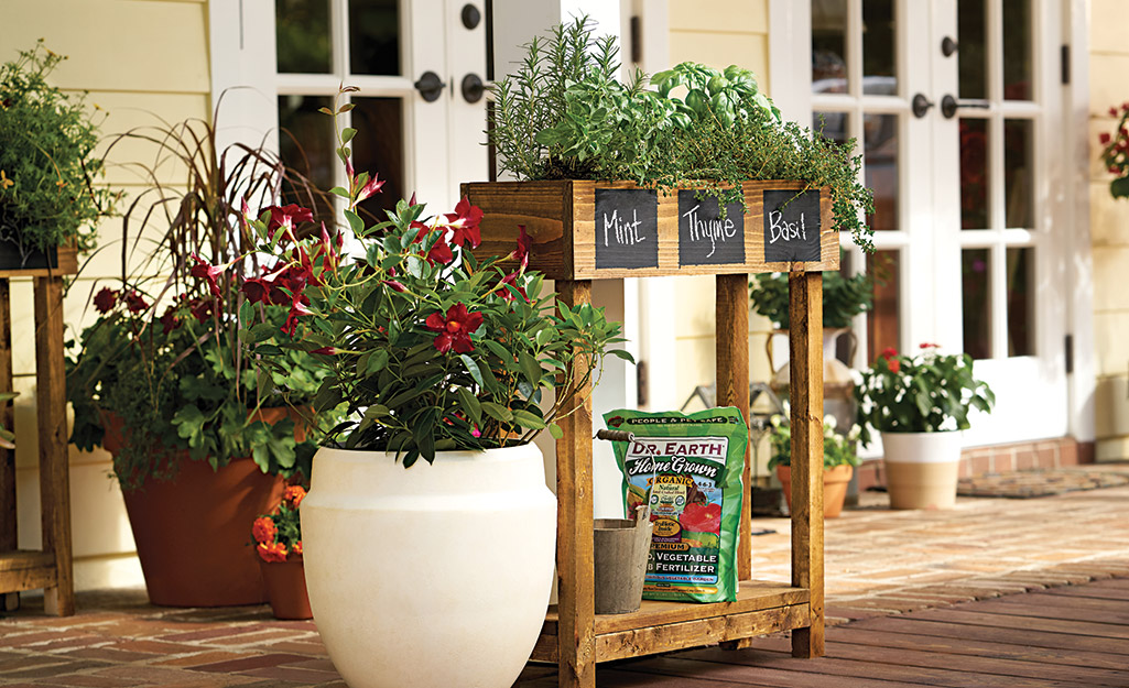 A collection of containers planted with fresh herbs and flowers.