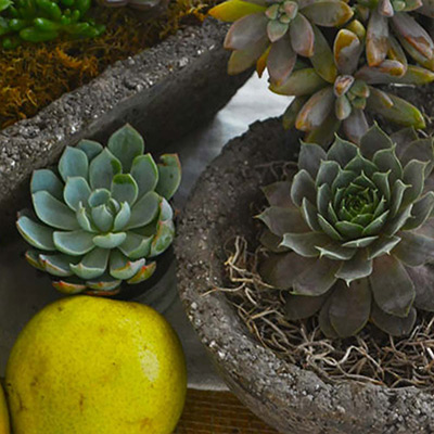3 Creative Ways to Display Hypertufa in Your Outdoor Space