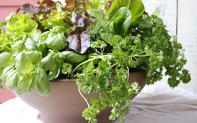 Fresh greens and herbs in a ceramic bowl
