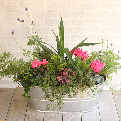 Pink flowers and green foliage in a galvanized planter.