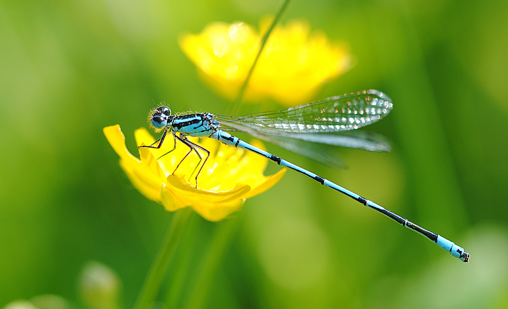 Dragonfly on a yellow flower.