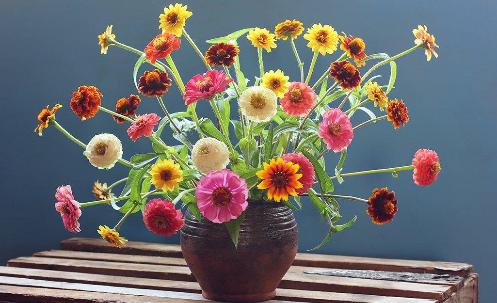 A vase filled with colorful zinnias.