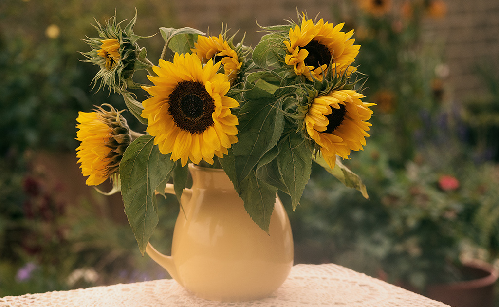 A vase of yellow sunflowers.