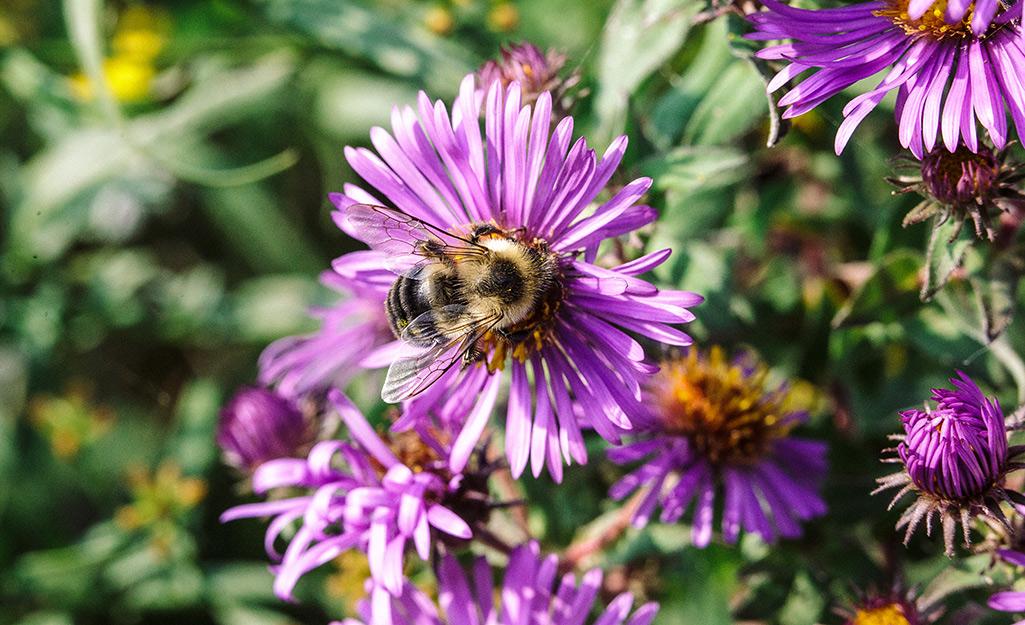 Late-Season Pollinators