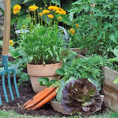 6 Expert Gardening Tips for New Gardeners