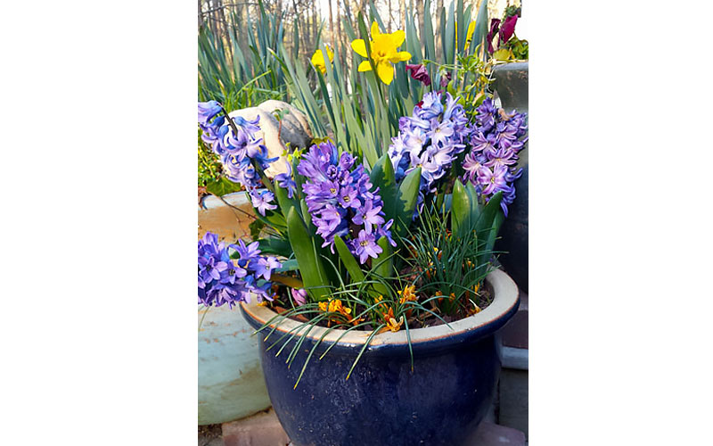 Layer Bulbs for Spring Blooms