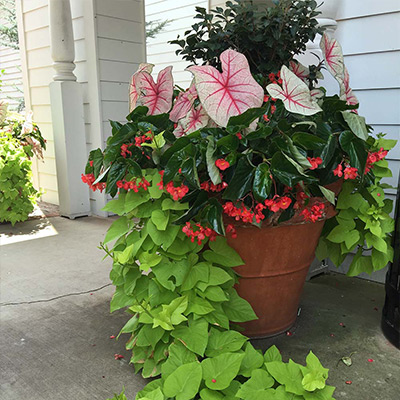 5 of Our Favorite Container Garden Spillers