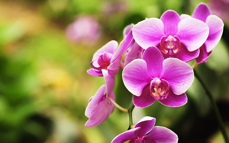 How Often Should I Water Orchids?