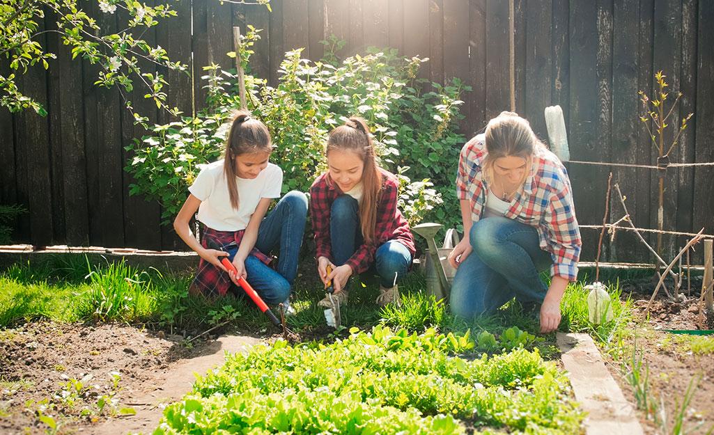 Family weeding their vegetable garden.