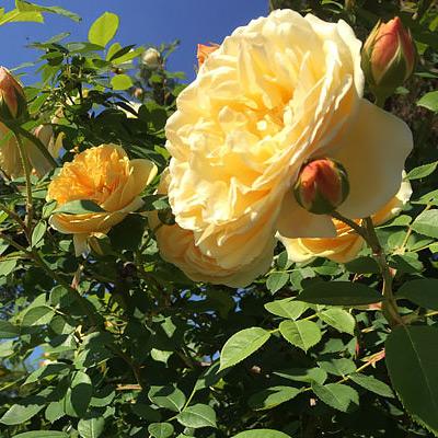 Rose Garden Ideas