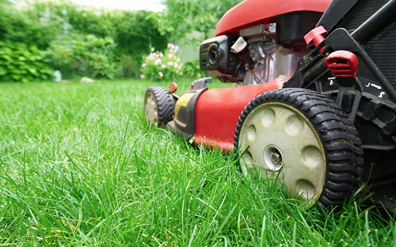 How To Make Grass Greener The Home Depot
