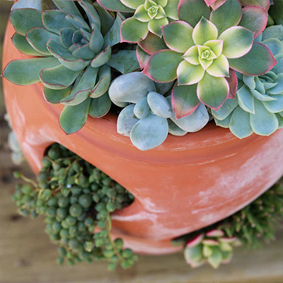 5 Things You Need to Know for Success with Succulents