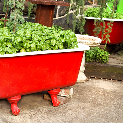 5 Unusual Plant Containers to Repurpose and Recycle