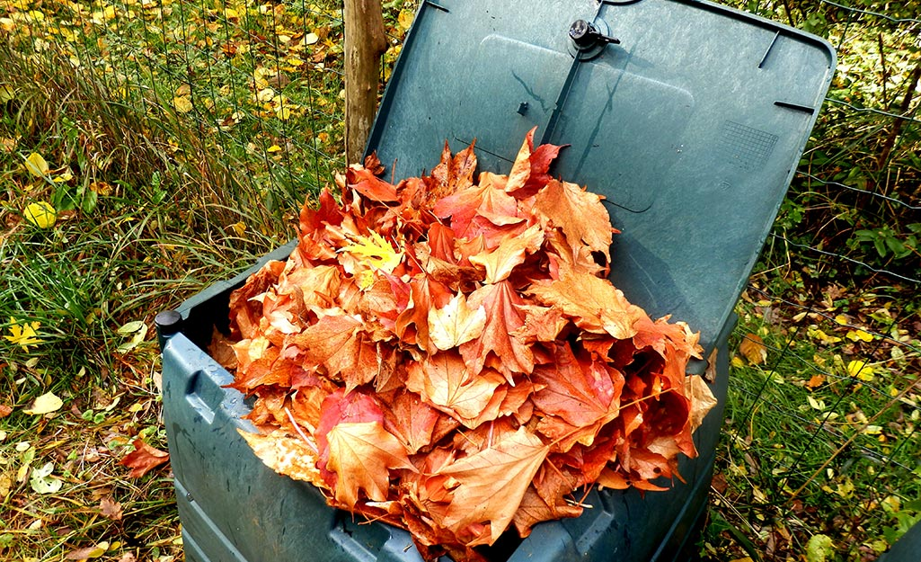 Leave are added to a bin for composting.