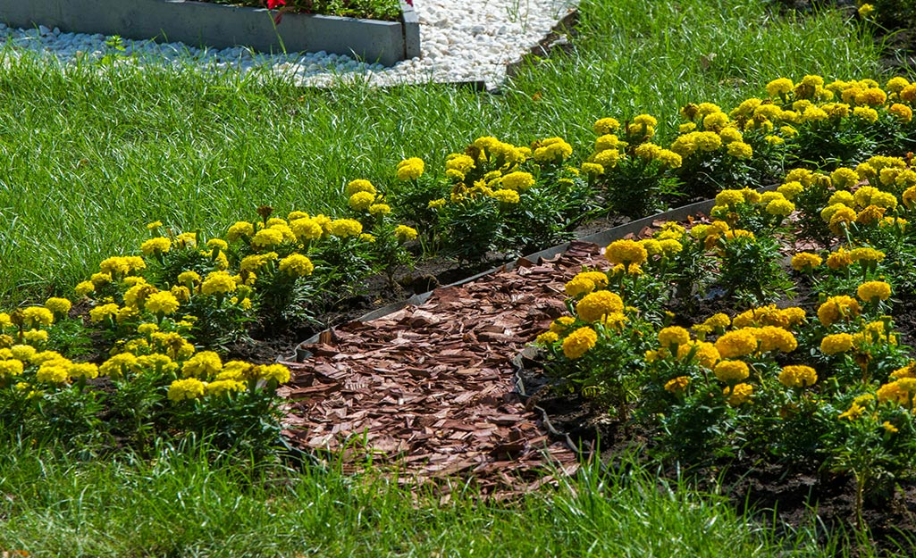 A flower bed with a mulch pathway.