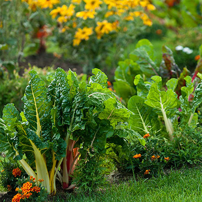 5 Ways to Clean Your Garden Beds
