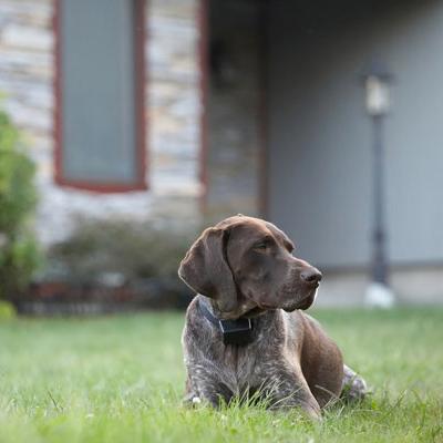 Dog-Friendly Gardening Tips