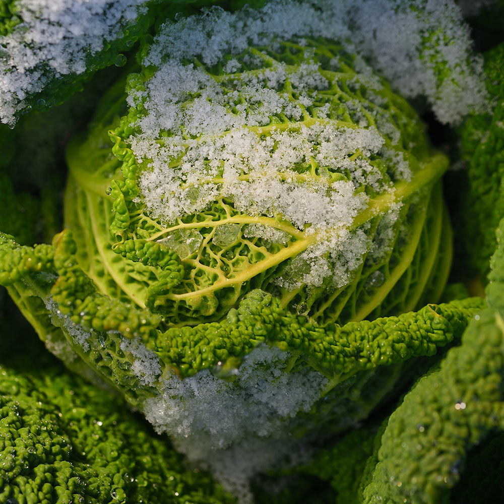 5 Ways to Protect Your Garden From Frost and Freeze Damage