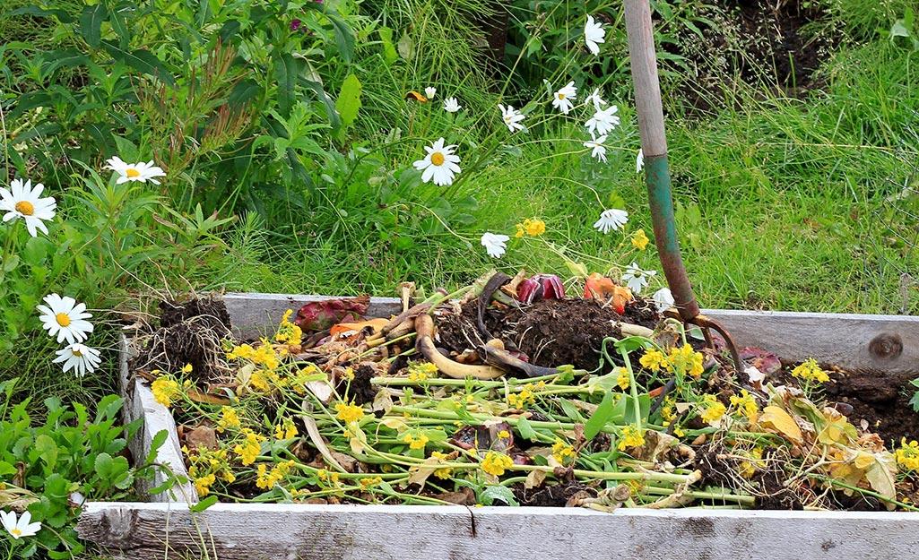 A vegetable garden in late summer