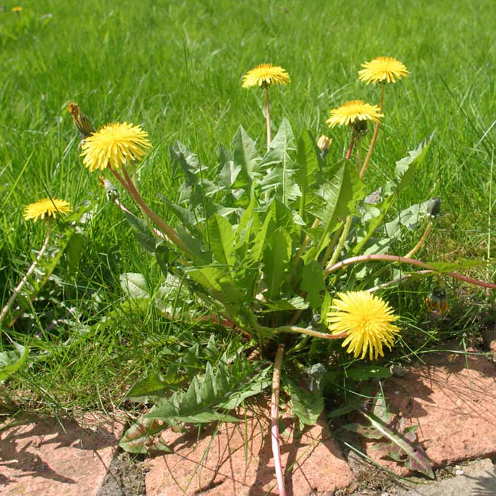 5 Ways to Whack Your Weeds