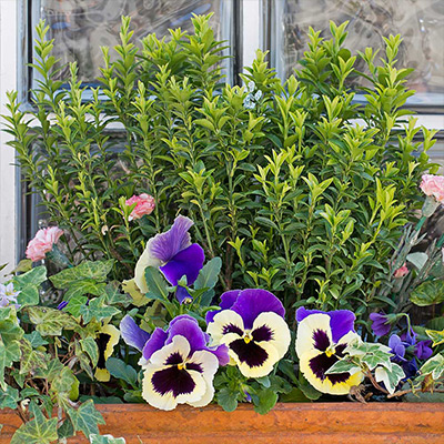 5 Window Box Ideas to Make Your Home Bloom