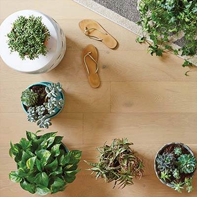 6 Easy Indoor Vine Plants