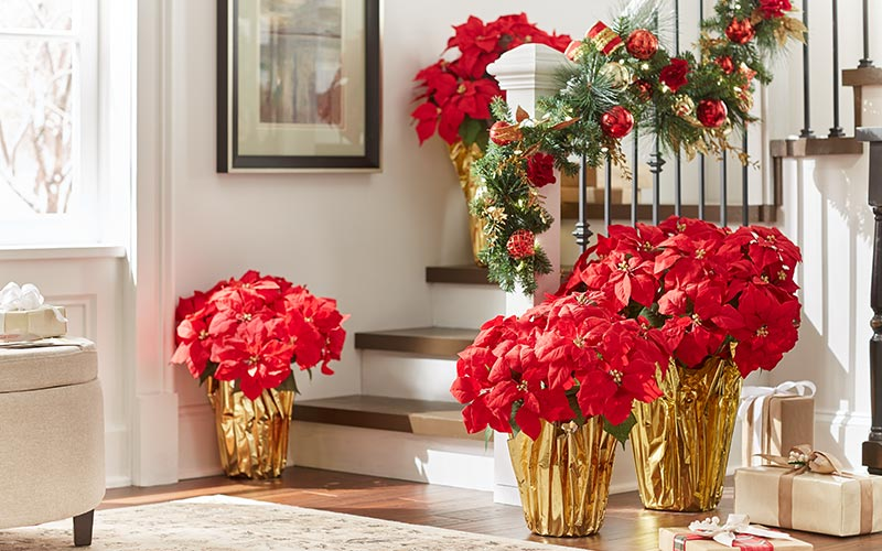 6 Easy Ways to Decorate with Poinsettias - The Home Depot