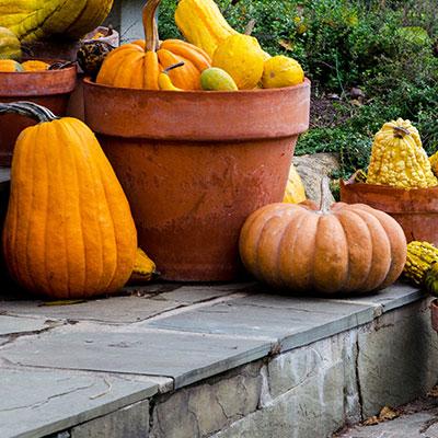 6 Fall Gardening Trends Seen on Pinterest