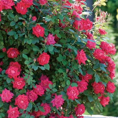 6 of the Best Shrubs to Plant this Fall