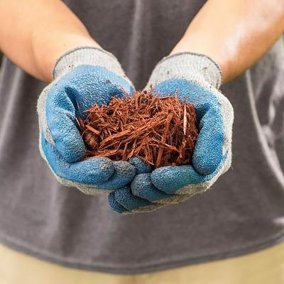 Gloved hands hold mulch