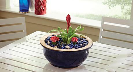 A tropical plant in a a dish garden.