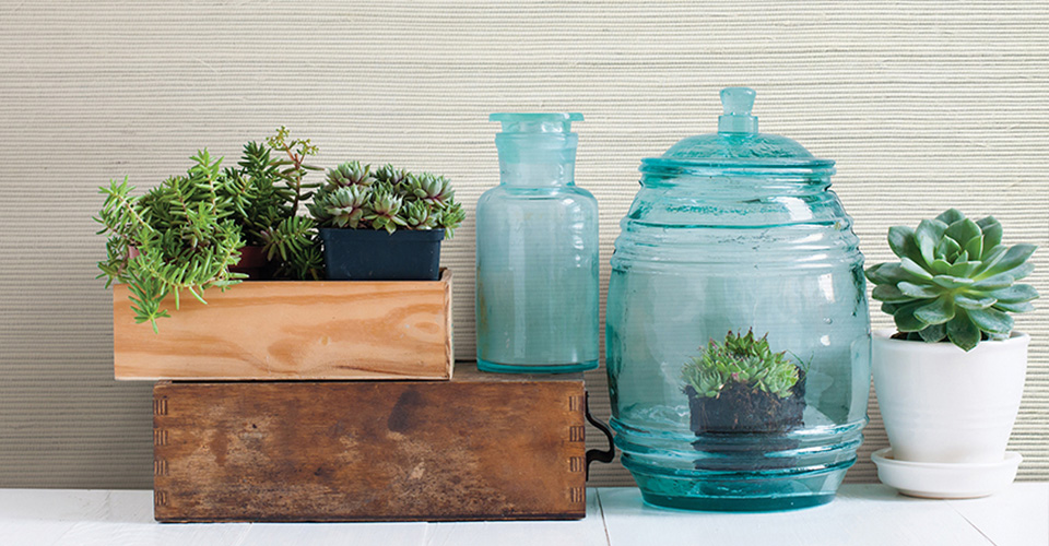 A group of houseplants in wood, ceramic and glass planters.