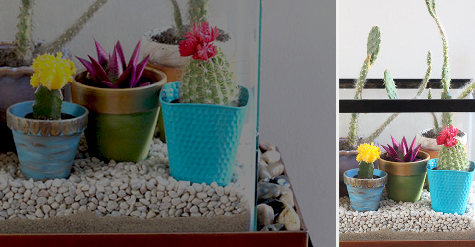 A group of cacti and succulents in colorful pots.