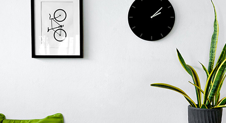 A snake plant next to a wall under a clock and a framed picture.