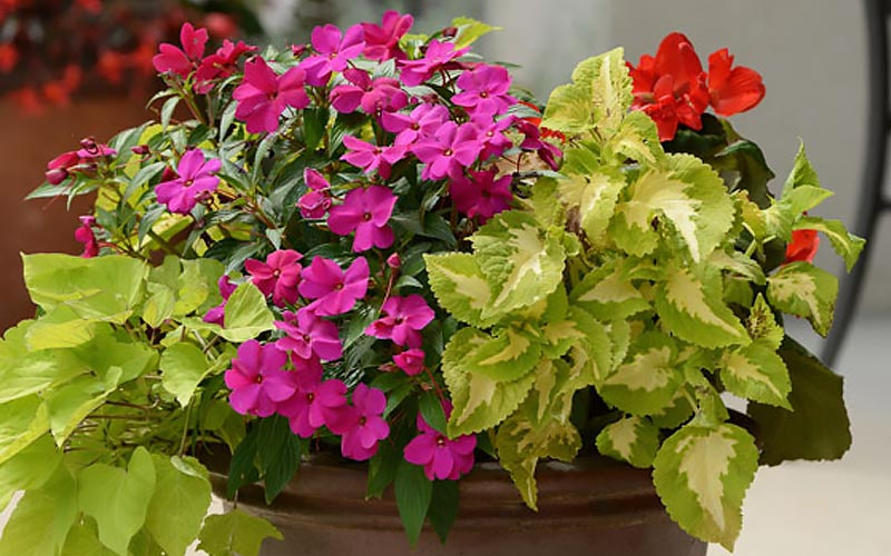 Colorful Flowers and Foliage