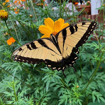 6 Ways to Create a Low-Maintenance Garden