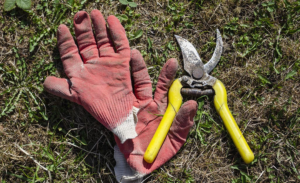 A gardener's gloves and pruners in the soil.